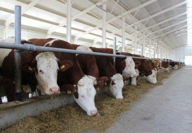 Открытие молочно-товарной фермы в Егорлыкском районе Ростовской области