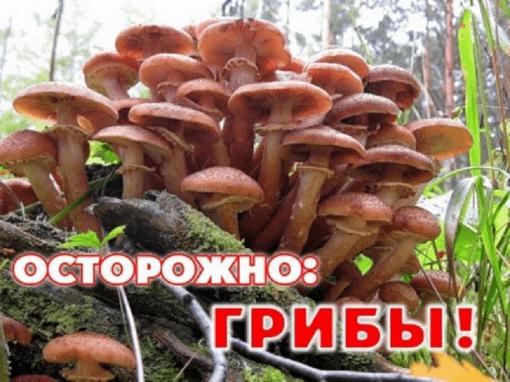Дикорастущие грибы смертельно опасны